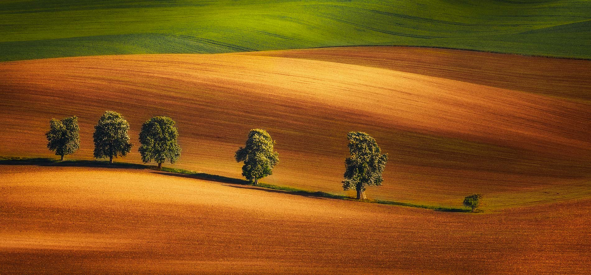moravian tuscany photo tour - alley of trees, South moravia, czech republic
